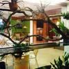 Akvárium v kavárně