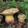 Ekocentrum Klenice otevírá nový mykologický klub