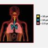 Obr.10: Způsob zachycování jednotlivých typů PM v dýchacích cestách (R.J.Šrám 2012)