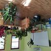 rostliny pro swap