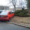 Ta červená se v sousedství zeleného jalovce skvěle vyjímá. Kdo by odolal..