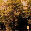 Historická fotografie údajně zachycuje Zelenovouse v jeho oblíbeném úkrytu. Výzkumný tým zatím detailně propátral dolní polovinu snímku a zjistil, že v ní Zelenovous není.