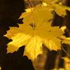 Podzimní prázdniny