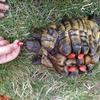 Naše želvičky si užívají léto venku