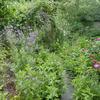 přírodní jedlá zahrada - foto Petra Vodenková