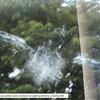 Typický důkaz nárazu ptáka do prosklené plochy, převzato z publikace Ptáci a skla od České společnosti ornitologické