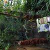 cedulky k rostlinám - olověnec