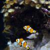 akvárium MOŘSKÉ
