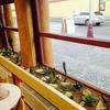 kaktus za oknem