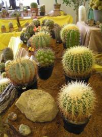 Prodejní výstava Kaktusů