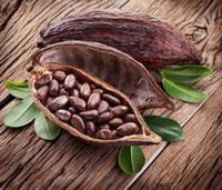 Cena kakaa - celorepubliková výstava na stromech - změna!